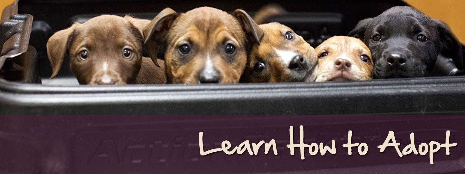 Learn-How-to-Adopt